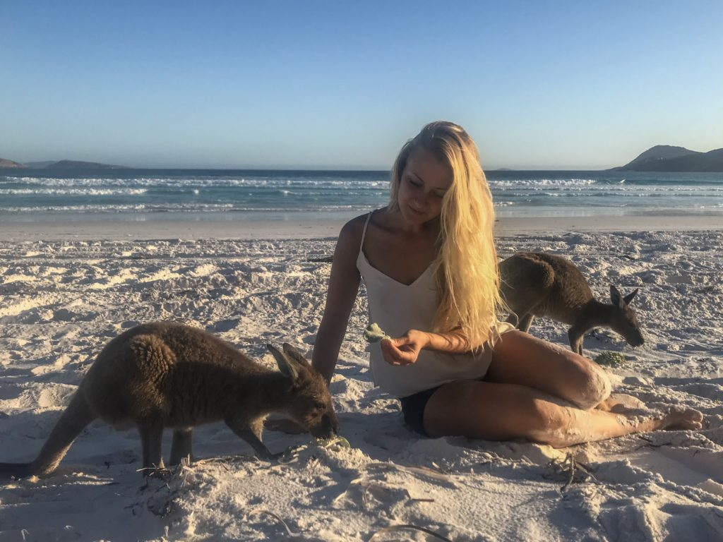 voir kangourou espérance australie