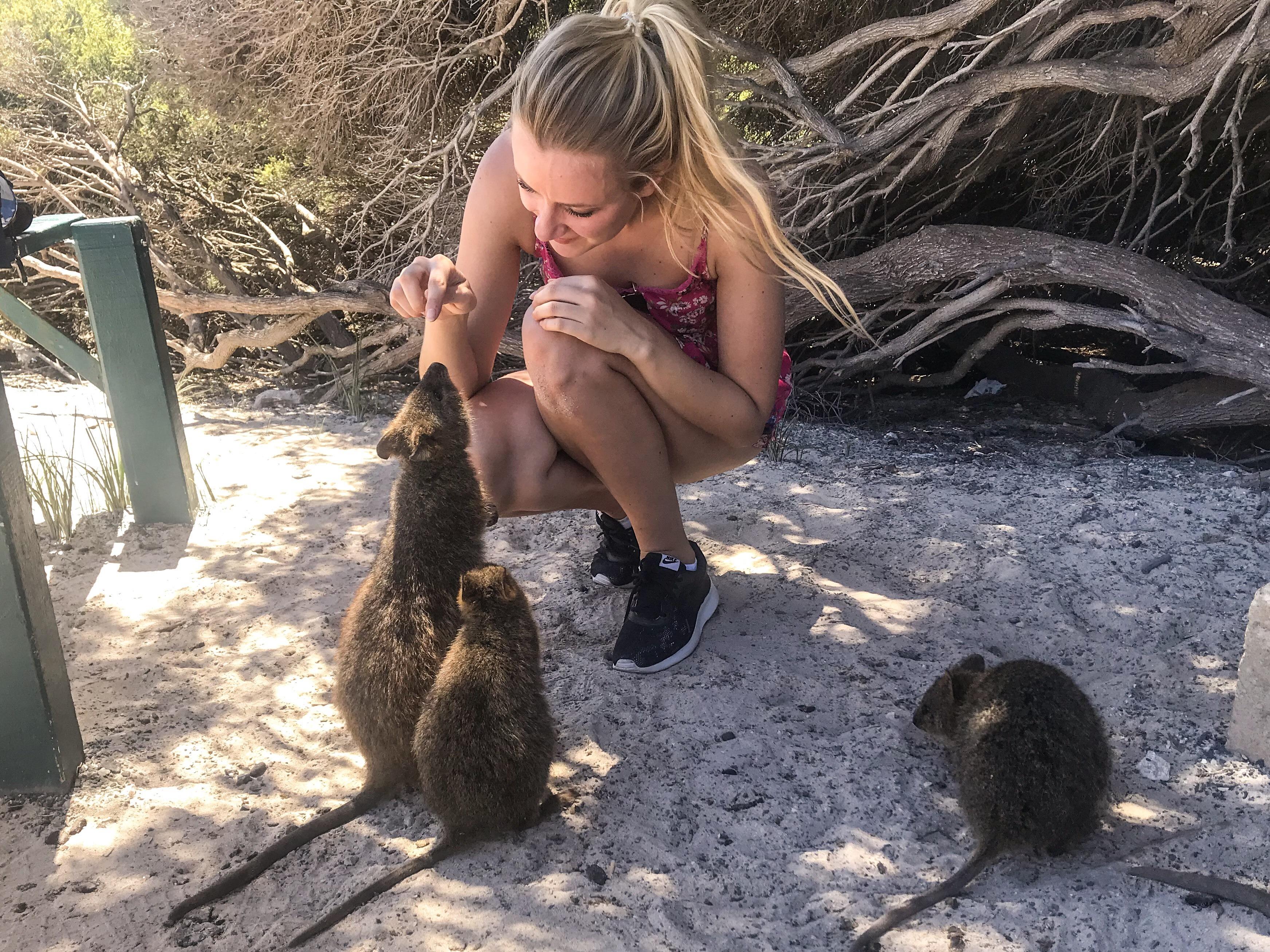 quokkas Rottnest island Australie