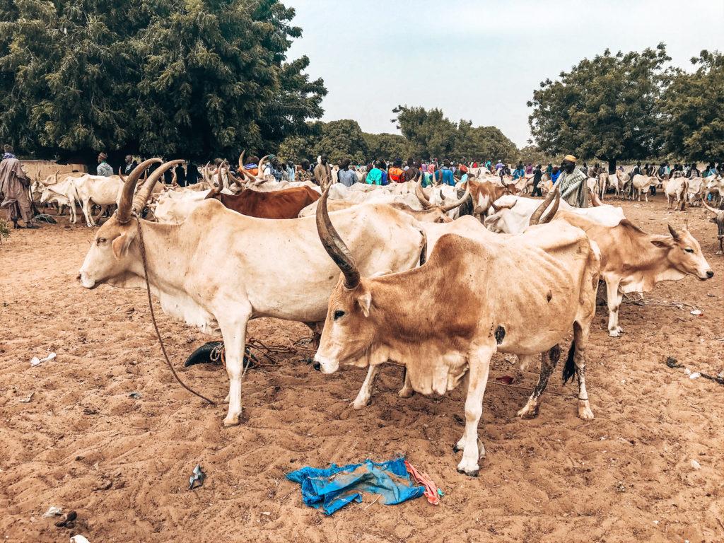 visiter Sénégal marché